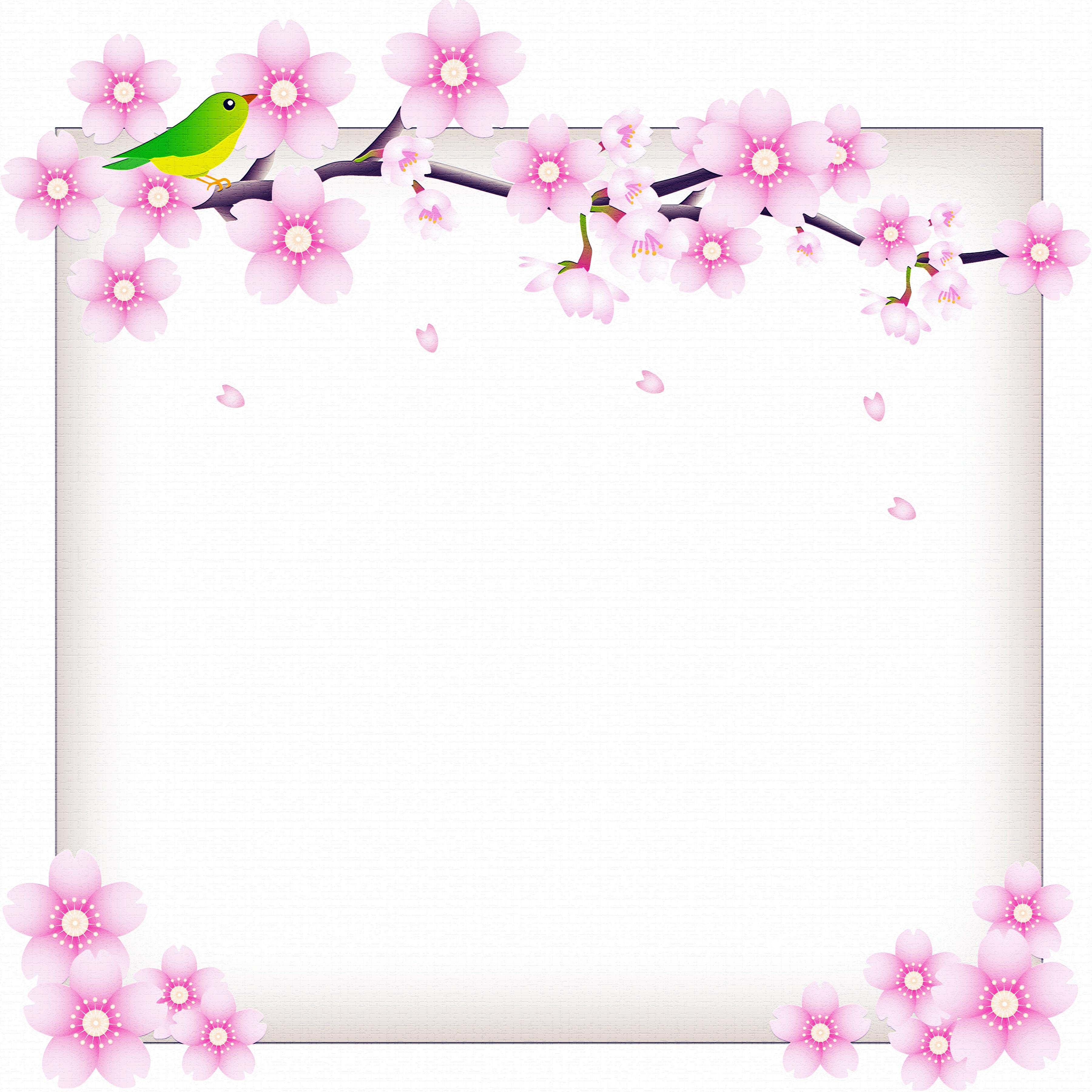 Fotos Vogel Blumen Ast Vorlage Grußkarte Blühende Bäume 3600x3600 Vögel Blüte