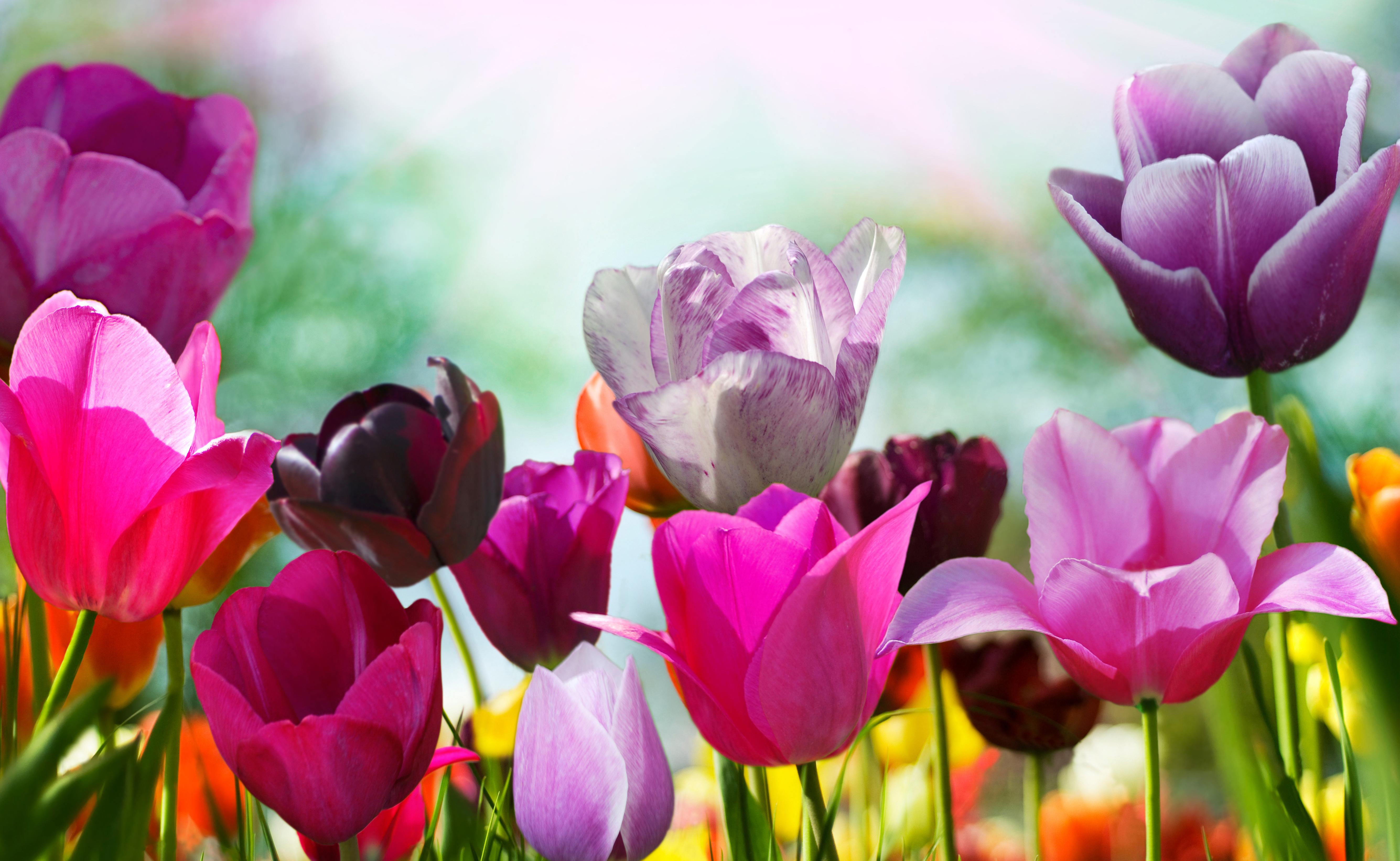 Обои Цветы На Рабочий Стол Скачать Бесплатно