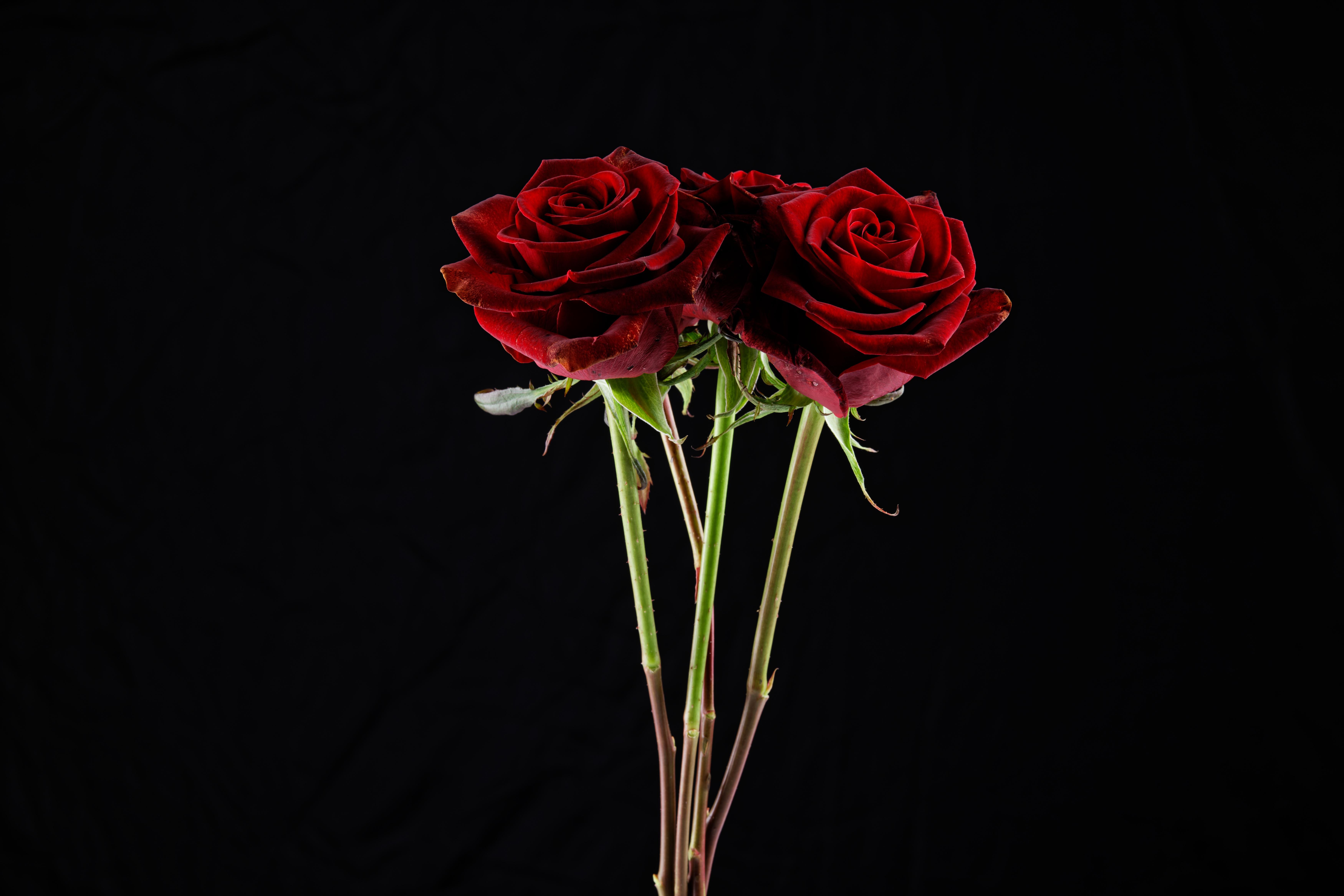 Desktop Hintergrundbilder Blumensträuße Rot Rose Blüte Schwarzer Hintergrund 7000x4669 Sträuße Rosen Blumen