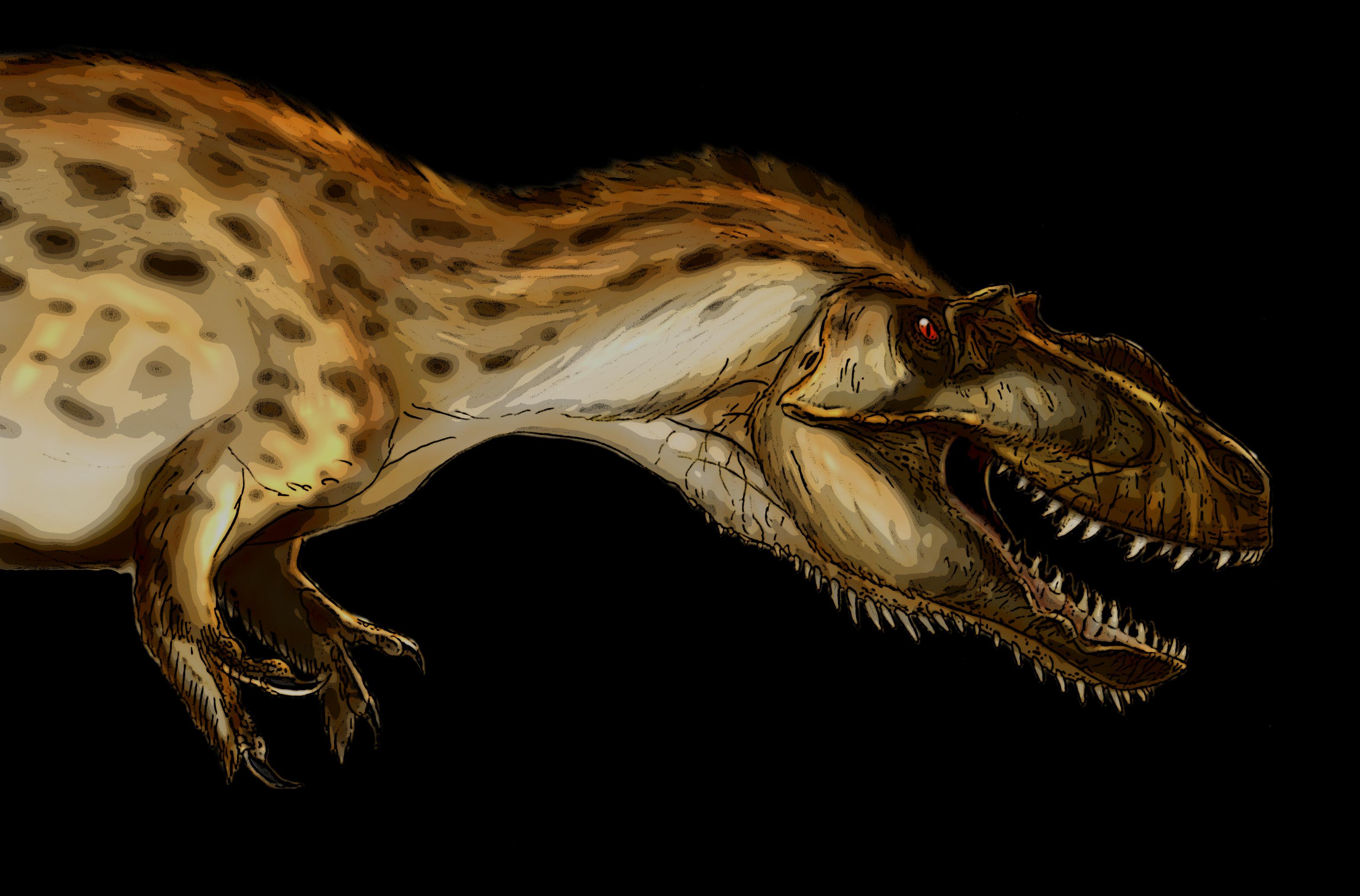 Wallpaper Dinosaurs Nanotyrannus animal Ancient animals Animals