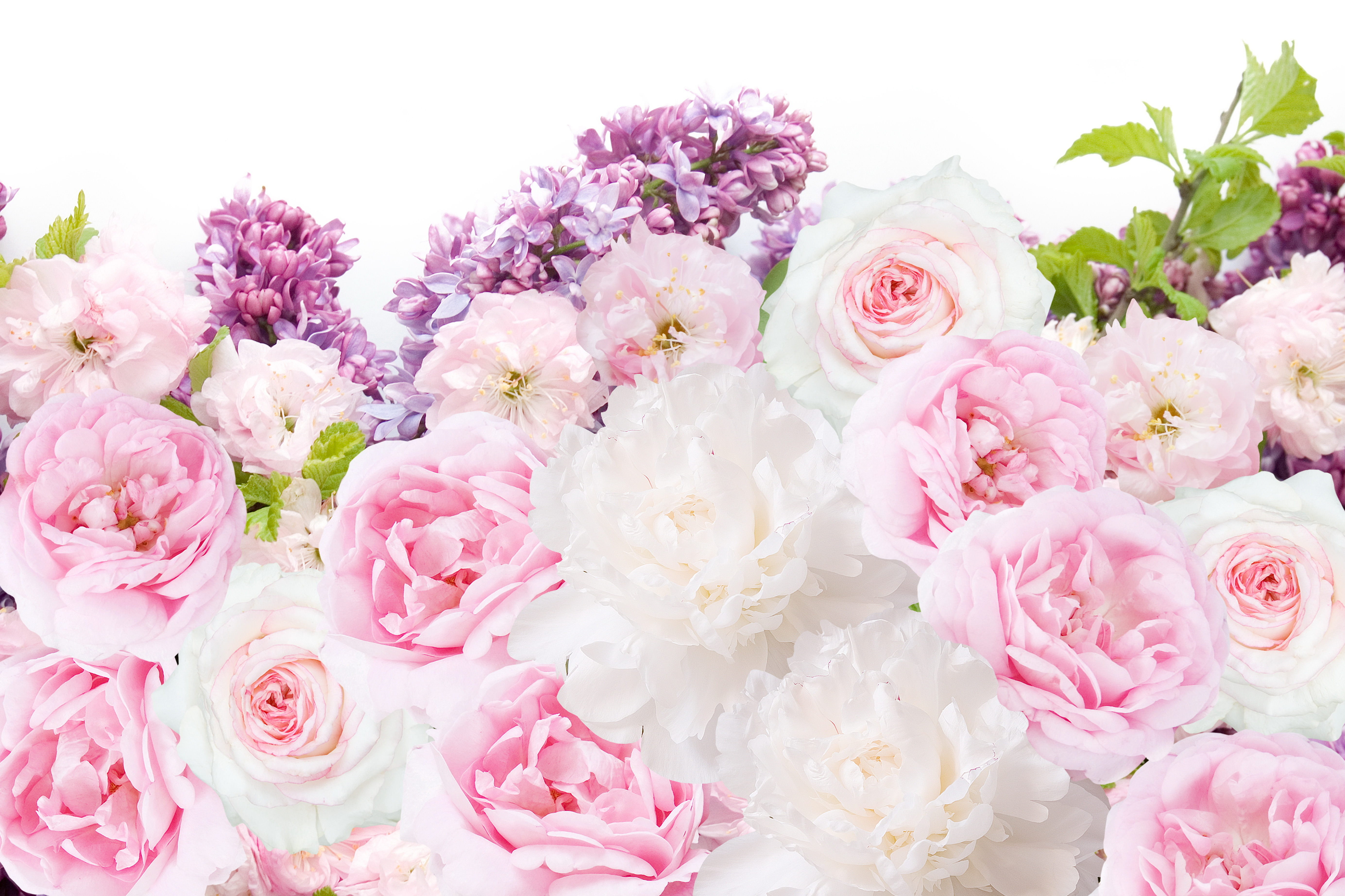 Wallpaper Rose Flowers Syringa Peonies 5538x3691
