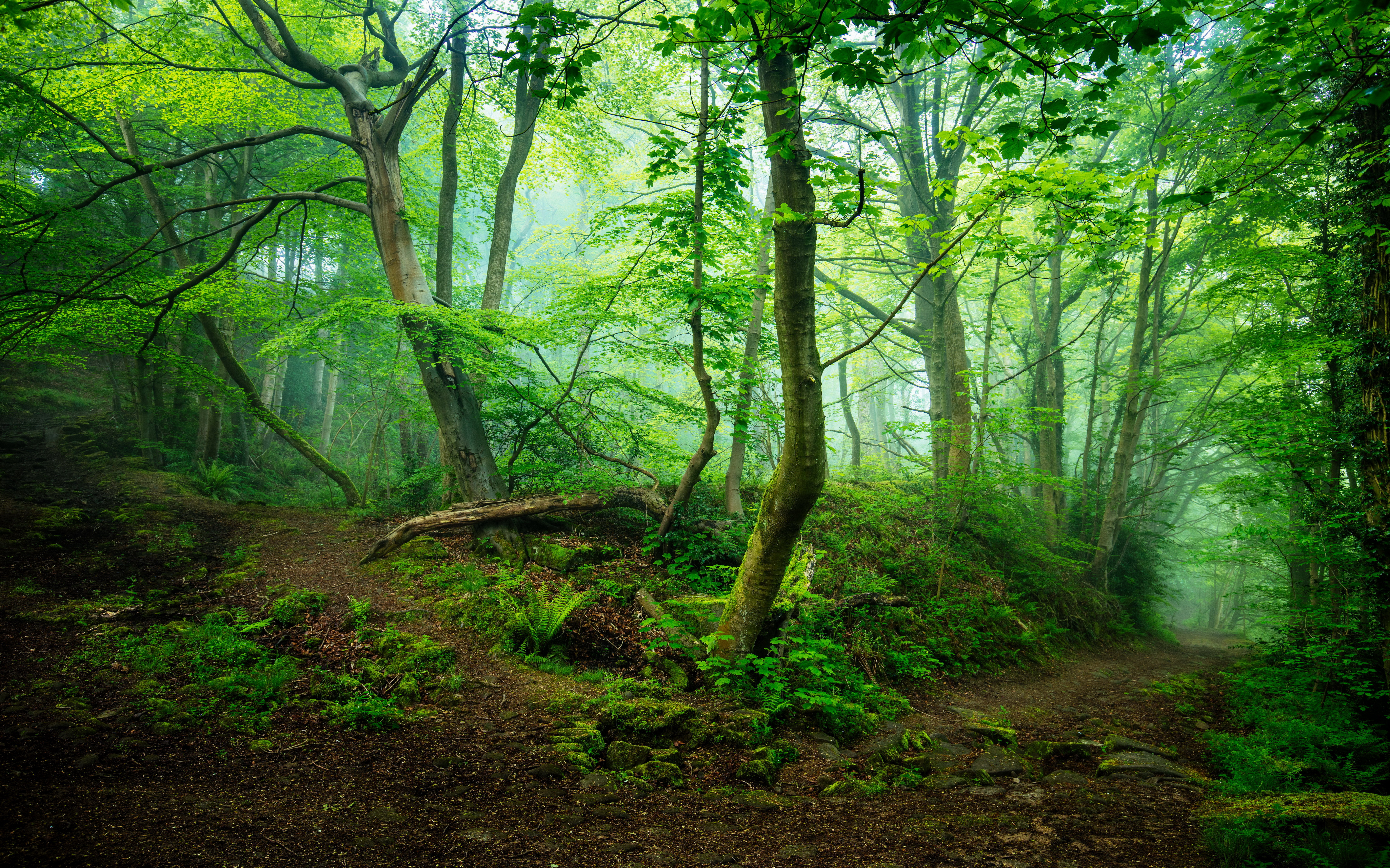 lo rewilding trees forests -