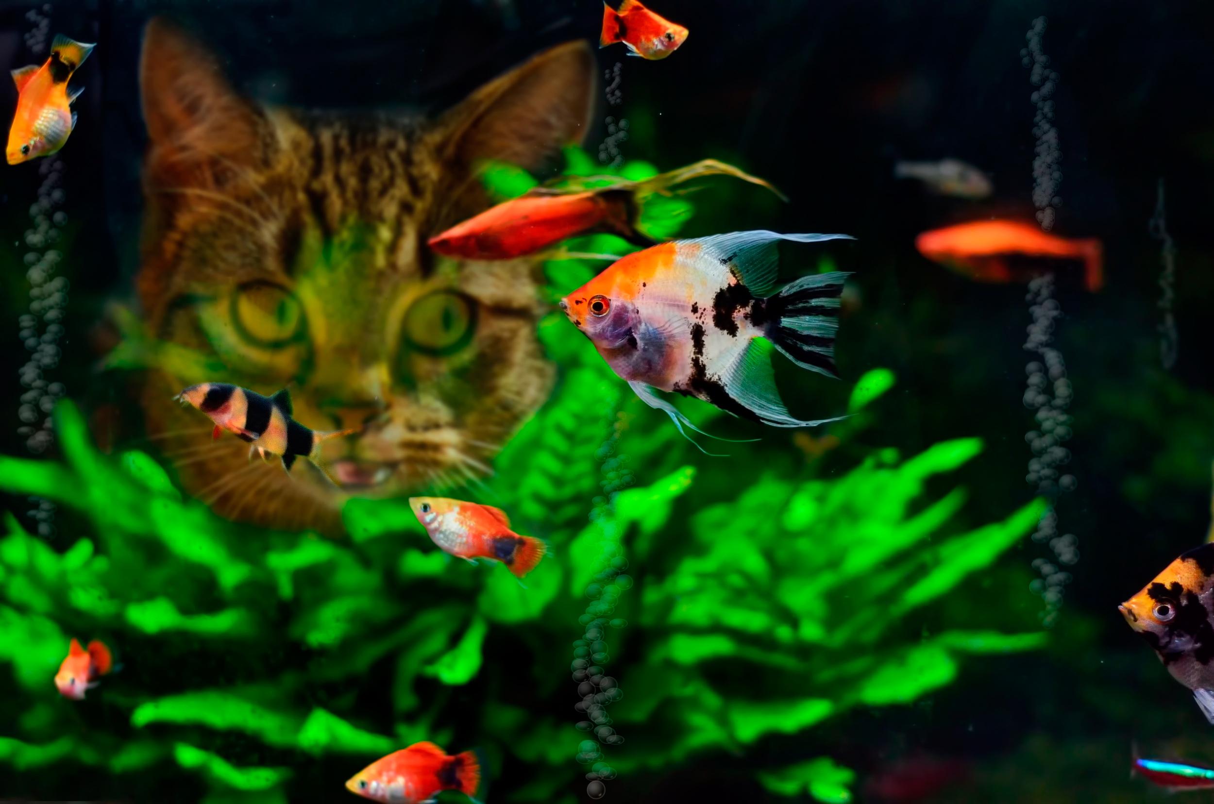 Обои На Рабочий Стол Аквариум Рыбки