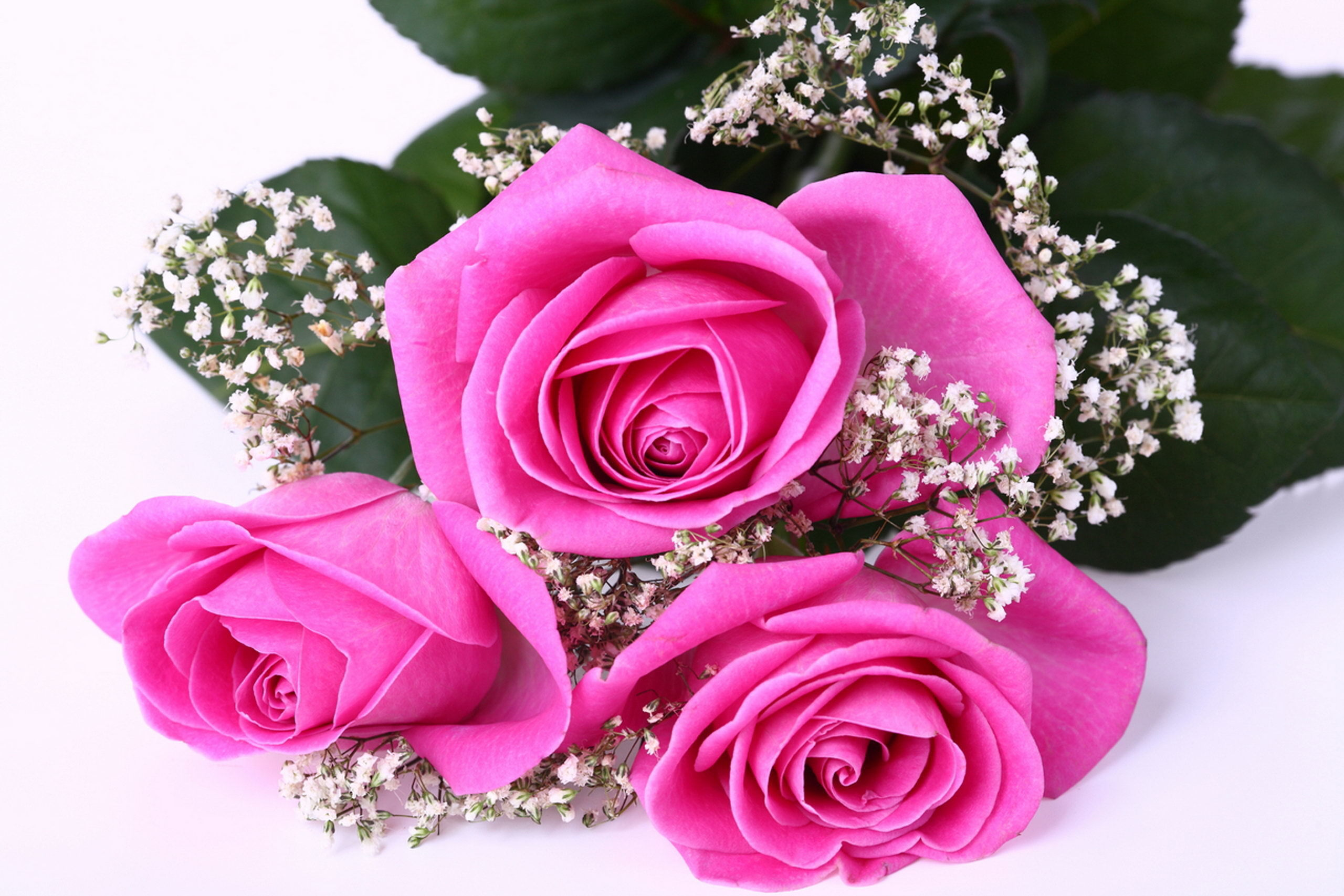 Images Roses Pink Color Flowers 2560x1706