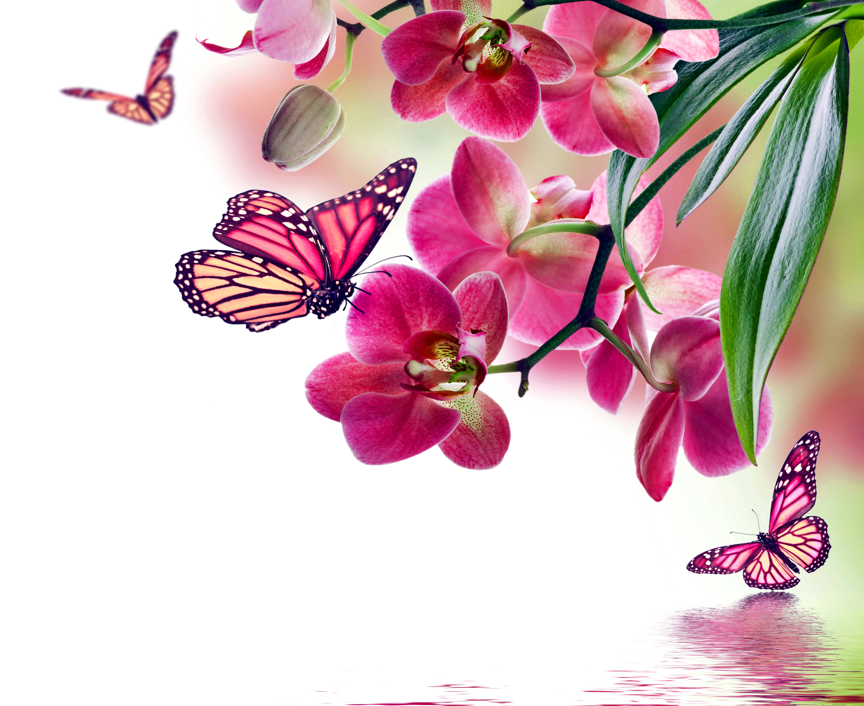 Foto Schmetterlinge Orchideen Blumen 6000x4900