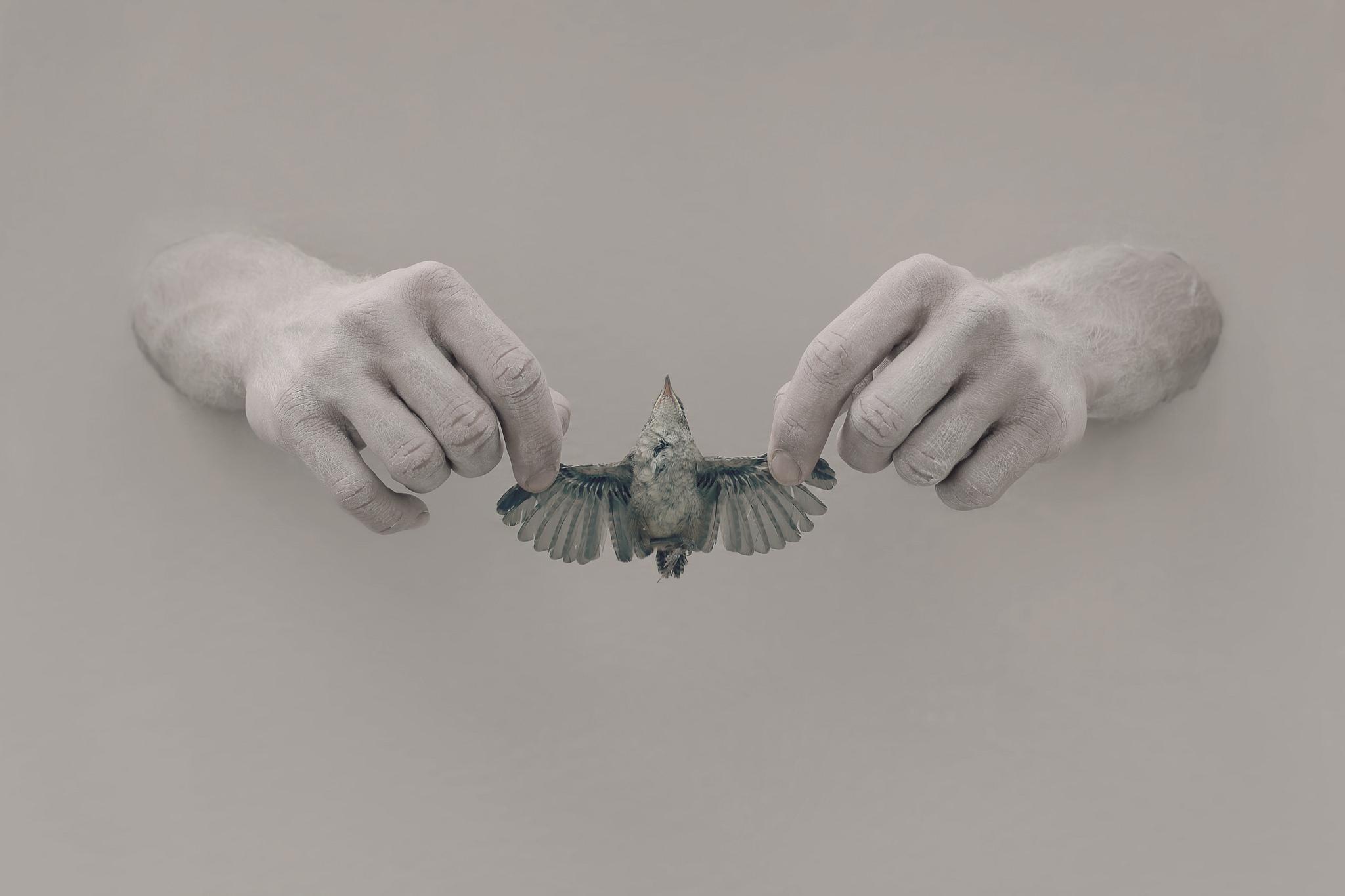 Images bird Hands Birds
