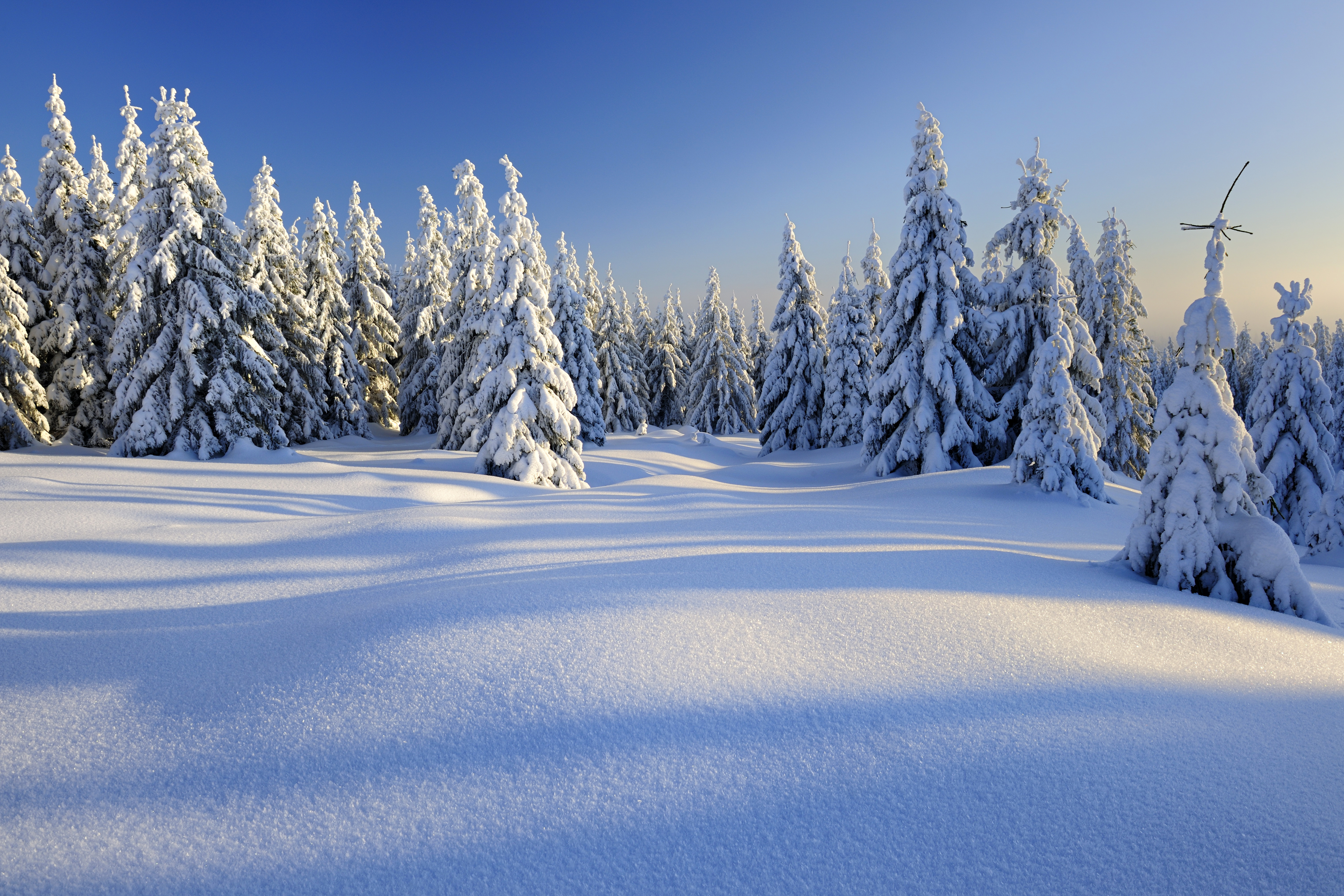 Красивые Обои Зима Бесплатно