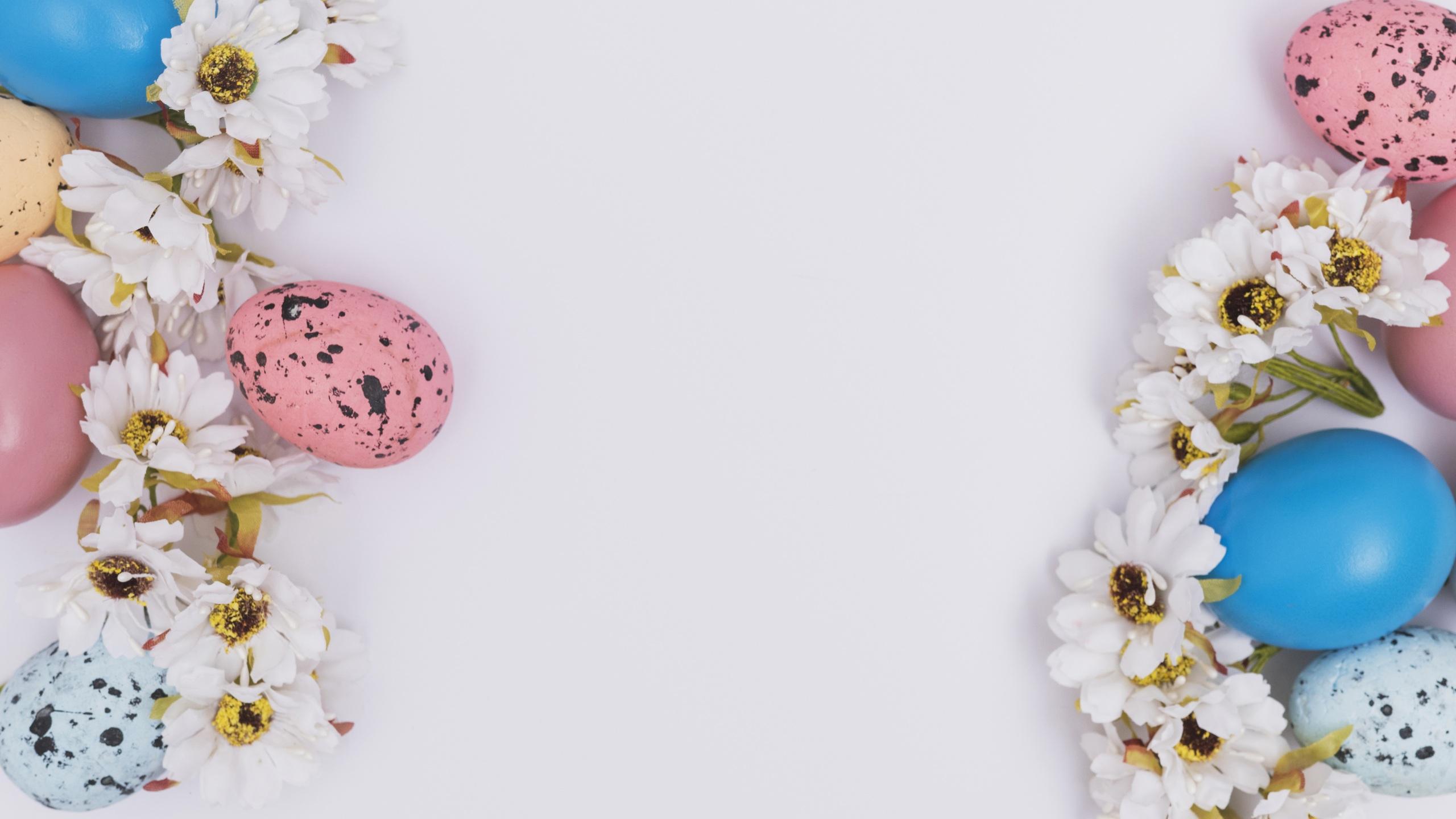 Image Easter Egg Chrysanths White Background 2560x1440