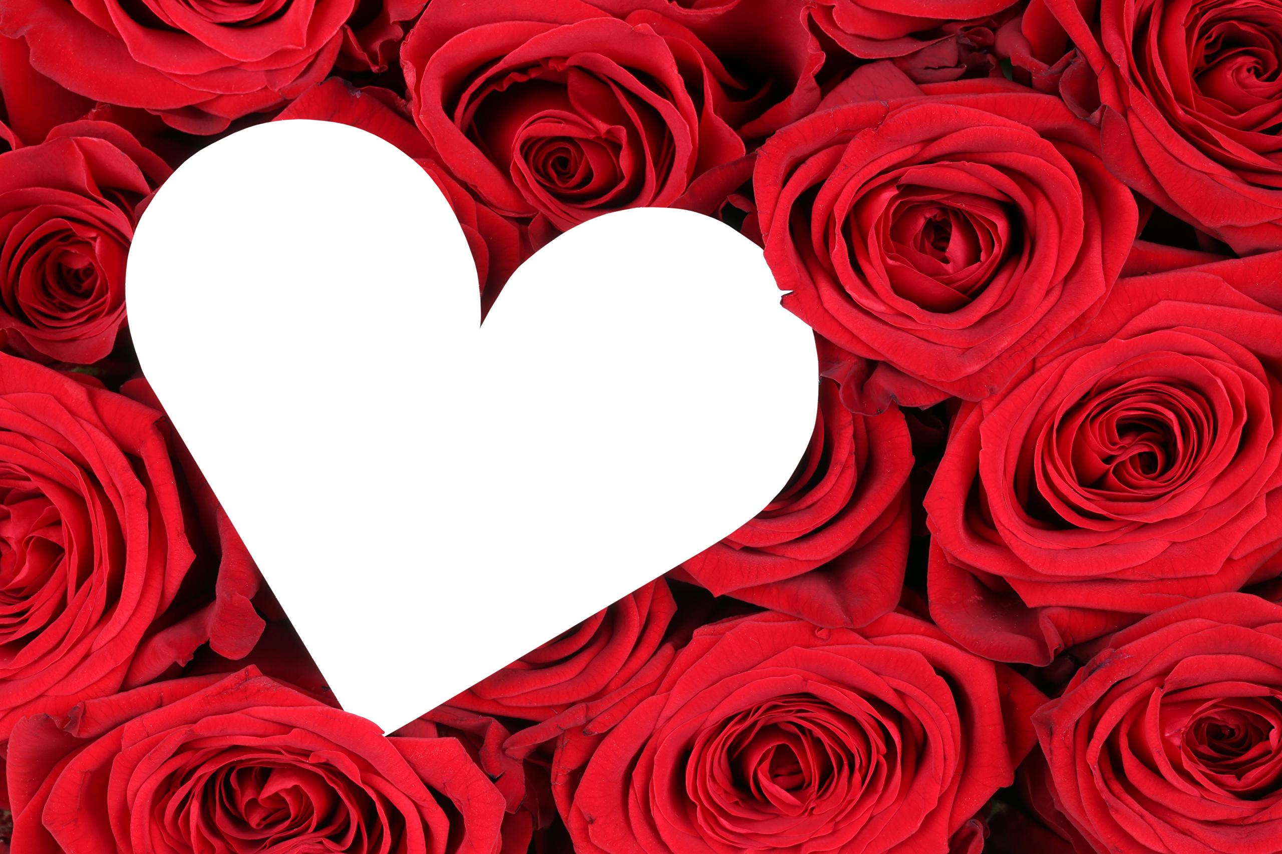 Desktop Wallpapers Heart Red Roses Flowers Template 2560x1706