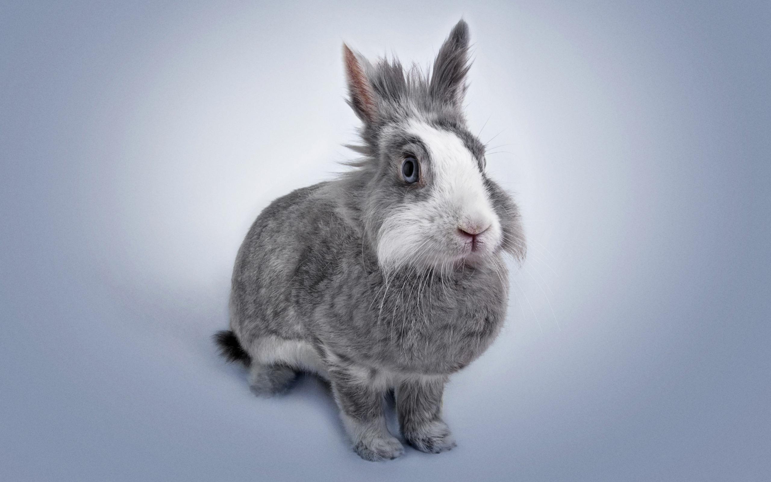 Bilder Kaninchen graue ein Tier 2560x1600 Grau graues Tiere
