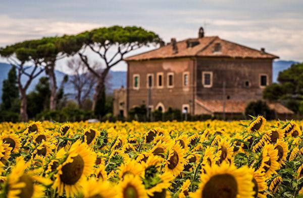 Photos Flowers Helianthus Building 600x393 flower Sunflowers Houses
