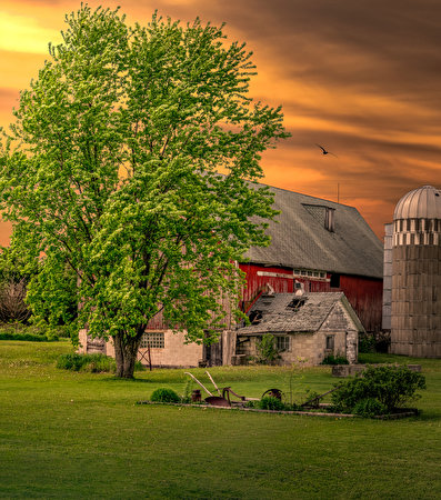 Foto USA Wisconsin Natura Prato rasato Alberi edificio 397x450 stati uniti pelouse Tappeto erboso La casa