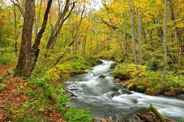 600x398 Outono Florestas Rios árvores Naturaleza