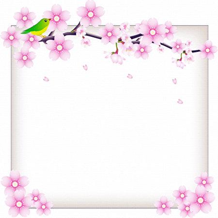 Fotos Vogel Blumen Ast Vorlage Grußkarte Blühende Bäume 450x450 Vögel Blüte
