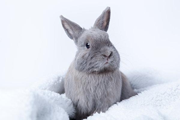 Foto Kaninchen graue ein Tier 600x400 Grau graues Tiere