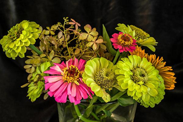 Bilder hellgrüne Blumen Zinnien hautnah 600x400 Gelb grüne Blüte Nahaufnahme Großansicht