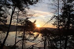 Bilder Sonnenaufgänge und Sonnenuntergänge Bäume Ast Lichtstrahl Natur