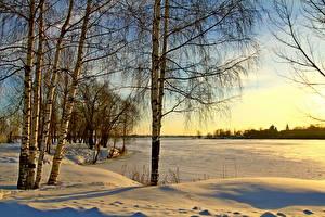 Bilder Jahreszeiten Winter Schnee Bäume Birken Ast Natur