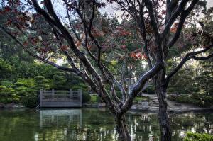 Fotos Garten Teich Vereinigte Staaten Bäume Kalifornien Ast HDRI Earl Burns Miller Japanese Natur