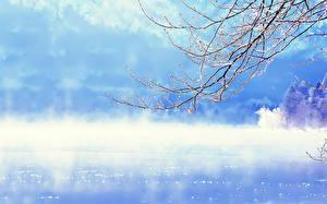 Fotos Jahreszeiten Winter Ast Nebel  Natur