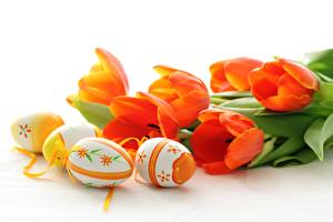 Picture Holidays Easter Tulips Eggs Orange