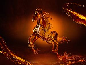 Pictures Horses Water Coca-Cola