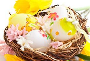 Fotos Feiertage Ostern Eier Nest