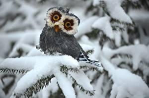 Bilder Spielzeuge Eulen Schnee Ast