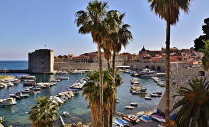 Picture Croatia Dubrovnik Palms Cities