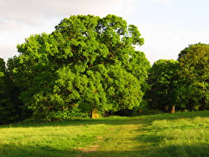 Pictures Seasons Summer Green Trees Nature
