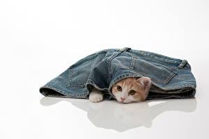 Hintergrundbilder Katze Jeans Shorts Tiere
