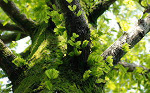 Hintergrundbilder Baumstamm Ast Laubmoose Natur