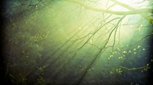 Hintergrundbilder Ast Lichtstrahl Natur