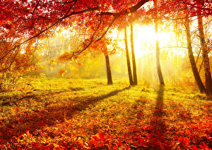 Bilder Herbst Sonnenaufgänge und Sonnenuntergänge Bäume Blattwerk Ast Lichtstrahl Natur