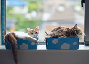 Hintergrundbilder Hauskatze Schachtel Fenster Schwanz Tiere