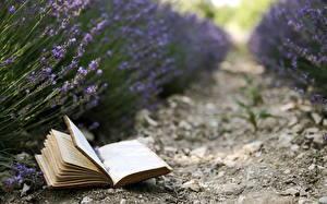 Hintergrundbilder Lavendel Felder Bücher Seite