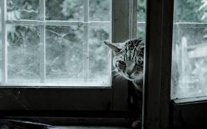 Hintergrundbilder Katze Fenster Tiere
