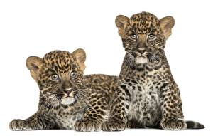 Photo Big cats Cubs Leopard 2 animal