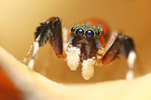 Bilder Gliederfüßer Hautnah Augen Tiere