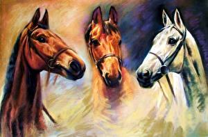 Photo Horses Pictorial art Head animal