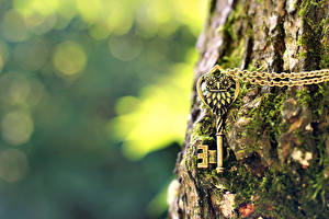 Pictures Closeup Bark of tree Key lock Trunk tree Moss Chain