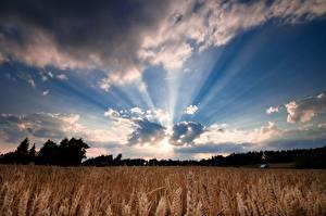 Fotos Felder Himmel Lichtstrahl Wolke Ähre