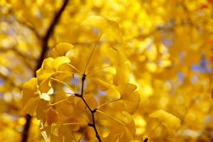 Bilder Großansicht Blatt Ast Gelb Natur