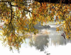 Bilder See Herbst Wasser Ast Natur
