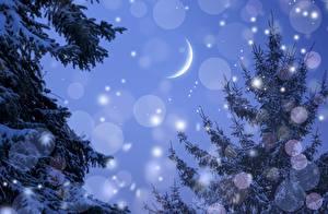 Hintergrundbilder Jahreszeiten Winter Himmel Mondsichel Fichten Ast Schneeflocken Mond Natur