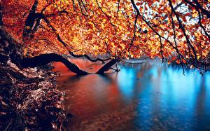 Fotos Jahreszeiten Herbst Wasser Ast Natur