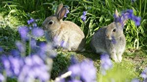 Image Rodents Hares Two Animals