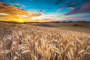 Bilder Felder Landschaftsfotografie Viel Himmel Weizen Ähre HDRI
