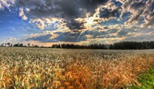 Bilder Felder Himmel Landschaftsfotografie Weizen Ähre Wolke HDR