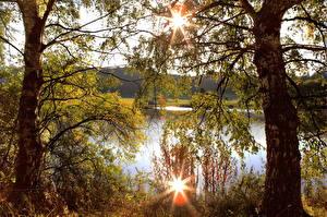 Fotos Landschaftsfotografie Deutschland Baumstamm Ast Birken Boos Natur
